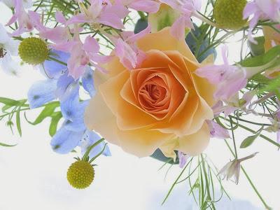Una rosa para la amistad