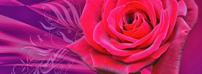 Una rosas para que la uses de portada