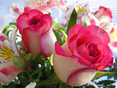 Rosas naturales día del amor y la amistad